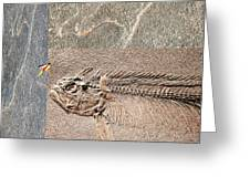 Fossil Fishing Greeting Card
