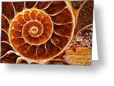 Fossil Nautilus Greeting Card