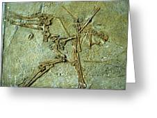 Fossil Remains Of The Pterodactyl Greeting Card