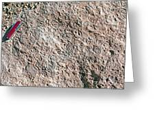 Fossiliferous Limestone Greeting Card