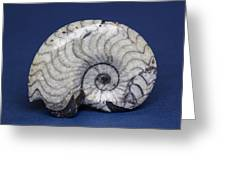 Fossilized Ammonite Greeting Card