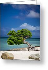 Fototi Tree - Aruba Greeting Card