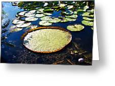 Foul Ball And The Lily Pads Greeting Card