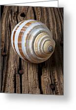 Found Sea Shell Greeting Card by Garry Gay
