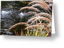 Fountain Grass Greeting Card