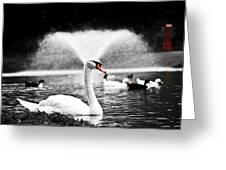 Fountain Swan Greeting Card by Shane Holsclaw