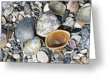 Four Beautiful Shells Greeting Card