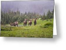 Four Brothers Greeting Card