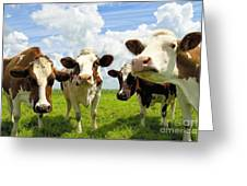 Four Chatting Cows Greeting Card