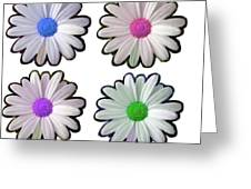 Four Daisy Hibrids Greeting Card
