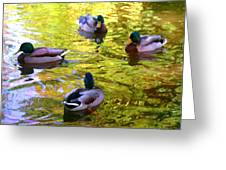 Four Ducks On Pond Greeting Card
