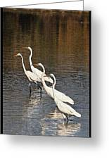 Four Egrets Fishing Greeting Card
