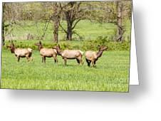 Four Elk Greeting Card