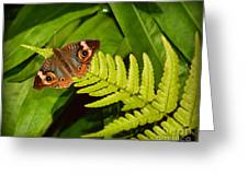 Four Eye Butterfly Greeting Card