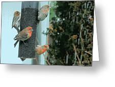 Four Finches Feeding Greeting Card
