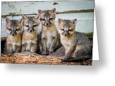 Four Fox Kits Greeting Card