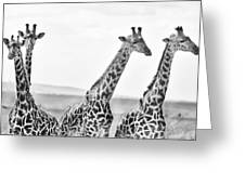 Four Giraffes Greeting Card