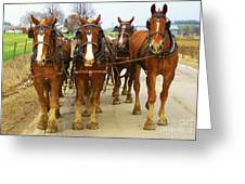 Four Horse Power Greeting Card by B Wayne Mullins