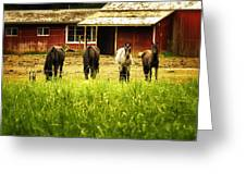 Four Horses Greeting Card