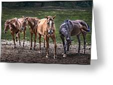 Four Horses E137 Greeting Card