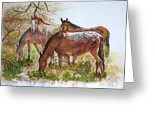 Four Horses Grazing Greeting Card
