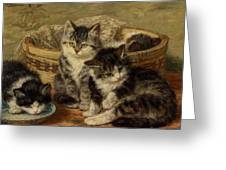 Four Kittens Greeting Card