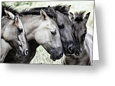 Four Konik Horses Greeting Card