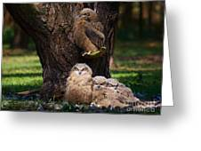 Four Owl Chicks In A Dark Forest Greeting Card