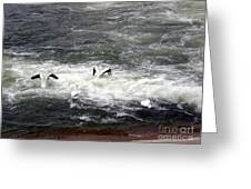 Four Pelicans By The Weir Greeting Card