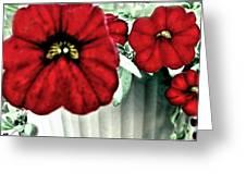 Four Petunias Hanging Greeting Card
