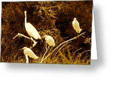 Four Resting Egrets Greeting Card