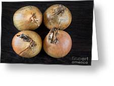 Four Ripe Golden Onions  Greeting Card