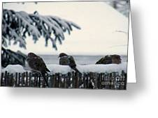 Four Turtle Doves Greeting Card