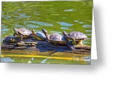 Four Turtles Greeting Card