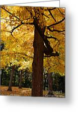Four Yellow Trees  Greeting Card