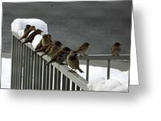 Fowl Weather Friends Greeting Card
