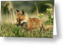 Fox Baby Greeting Card