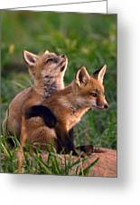 Fox Cub Buddies Greeting Card by William Jobes