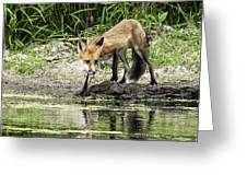 Fox Drink Greeting Card