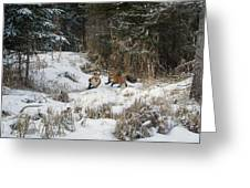 Fox Hollow Greeting Card