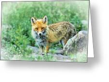 Fox In The Rocks Greeting Card