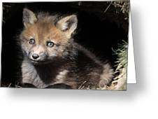 Fox Kit In Den Greeting Card