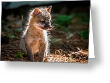 Fox Kit Greeting Card