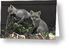 Fox Kit Siblings Greeting Card by RJ Martens