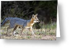 Fox On The Move Greeting Card by Dana Moyer