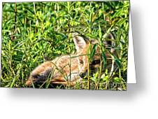 Red Fox Pup Hiding Greeting Card