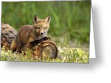 Fox Pup In The Morning Light Greeting Card