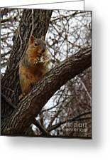Fox Squirrel 1 Greeting Card