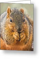 Fox Squirrel Greeting Card