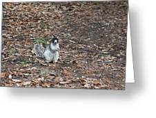 Fox Squirrel Curious Greeting Card